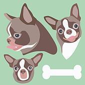 Chihuahua Head