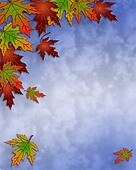 Autumn Fall Leaves and sky Border