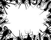 Bug frame