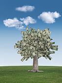 money tree & blue sky