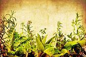 Grunge Herbs
