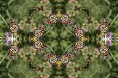 Kaleidoscopic Monarch Butterfly