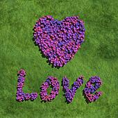 purple love and heart create by flowers with grass