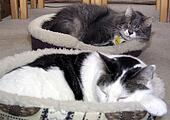 Let Sleeping Cats Lie…