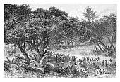Negroes Collecting Turtles on the Banks of the Guengo River, vintage engraving