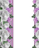 Roses white and lavender border