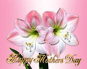 Mothers Day border pink amaryllis