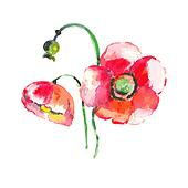Watercolor Poppy Flower - in vector