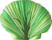 Seaweed Seashell
