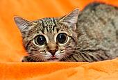 Funny Cat with big eyes