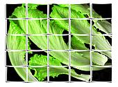 lettuce leaves collage