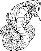 Cobra snake illustration