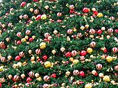 Field of christmas decoration