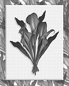 Calla Lilies Bouquet Black and white