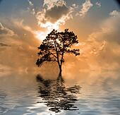 Water and tree sunset