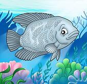 Big Urama fish