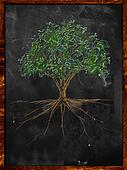 Tree Sketch color leaves and root o