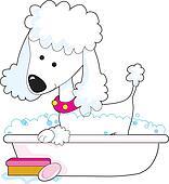 Poodle Bath