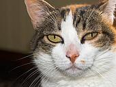 cat abscess home care
