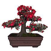 Satsuki azalea tree bonsai - 3D render