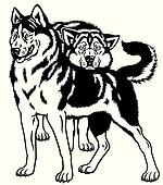two siberian husky black white