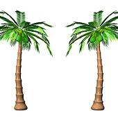 Tall Palm Trees On White