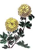 chinese painting chrysanthemum