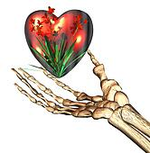 red 3D heart in bones hand