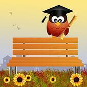 owl graduate