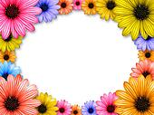 Frame made from colored flowers