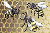 Three wasps