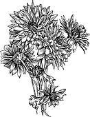 Bunch of Chrysanthemum flowers