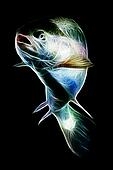 Rainbow Trout Fish Fractal