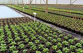 young plants in greenhouse