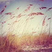 inspirational beach scene