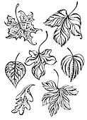 Set of contour leaves