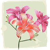 Lily Flowers On Grunge Background