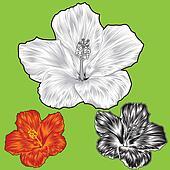 Hibiscus flower blossom variations