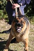 Angry Police Dog