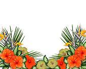 Tropical Hibiscus Flowers border