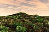 Lush Hill