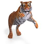 Big Cat Tiger