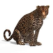 Big Cat Leopard