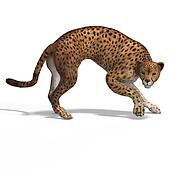 Big Cat Cheetaah