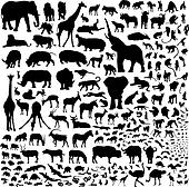 all the animals of Africa