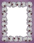 Floral Border Orchids purple