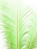 Palm leaf abstract