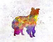 Border Collie in watercolor