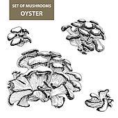 Mushrooms. Oyster.