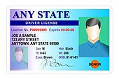 Male drivers license